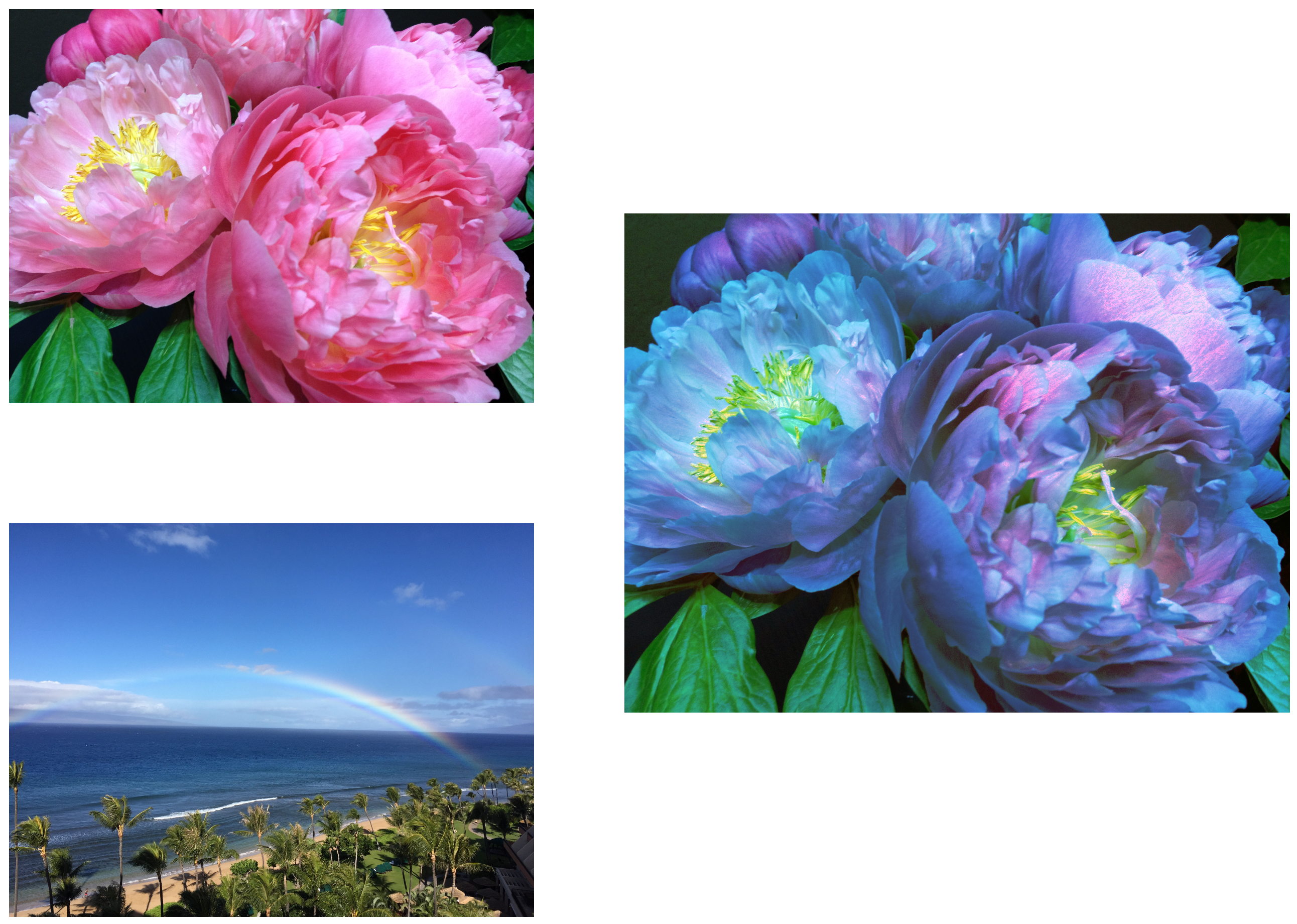Photos showing original image, histogram source image, and histogram specified result.