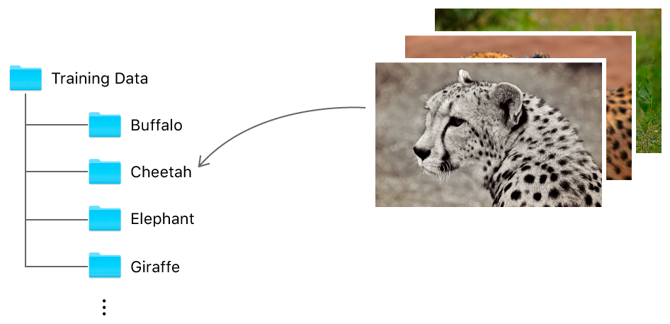 "Diagram showing a folder called Training Data with subfolders that are named using the label corresponding to the class of images they contain. For example, all the cheetah images go into a subfolder called ""Cheetah""."