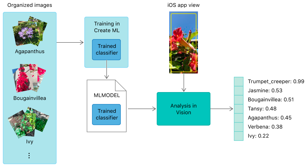Block diagram showing how images used to train a Create ML model help classify images in a Vision app.