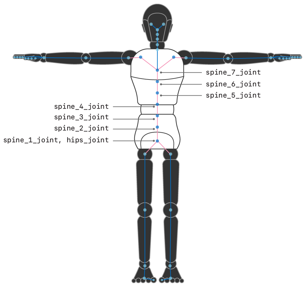 Illustration showing a humanoid figure with the names of the joints and relationships for the torso.