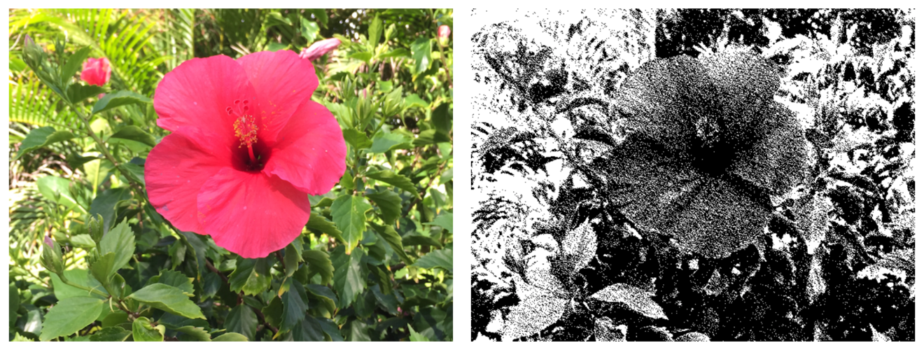 Photos showing the original image and the dithered image.