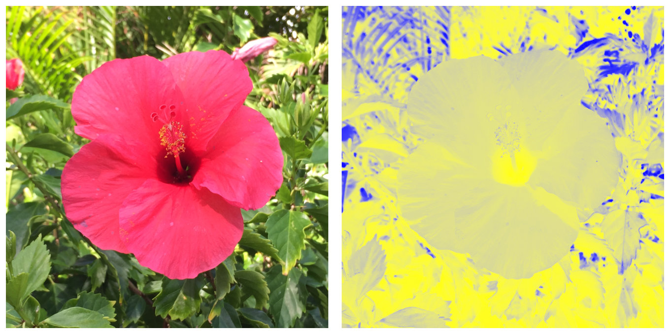 Two photographs showing a flower. The image on the left shows the original version of the flower. The image on the right shows the false color version of the flower.