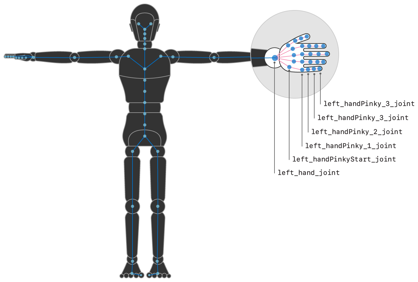 Illustration showing the left hand of the humanoid figure highlighted, with some of the joints named.