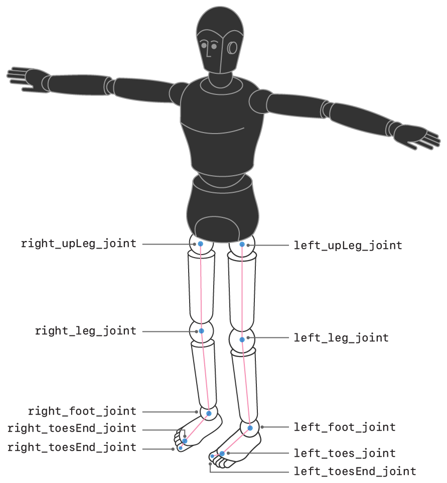 Illustration of a humanoid figure with the leg joints highlighted and labeled.