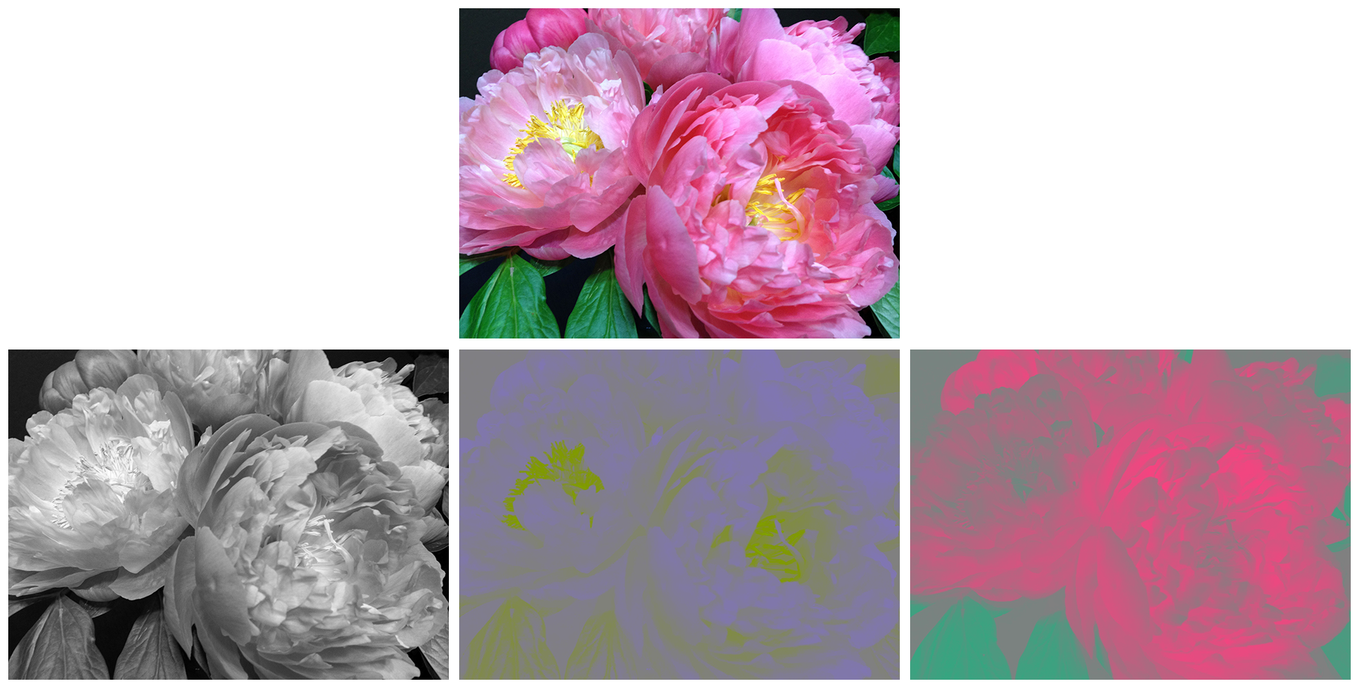 Photos showing an image separated into luminance and chrominance channels.